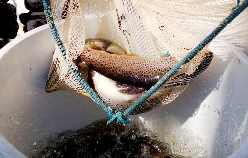 Kiiminkijoen kalatalousalue